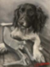 naughty springer puppy .jpg