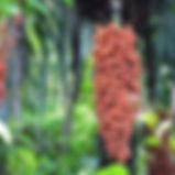 Casa-Orquidea-7.jpg