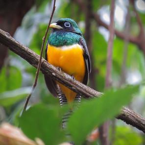 Ojo del Mar for Birders