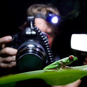 Picturing the Rainforest: Tips for Photographers