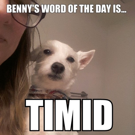 Benny's Word of the Day is timid