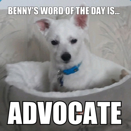 Benny's Word of the Day is advocate