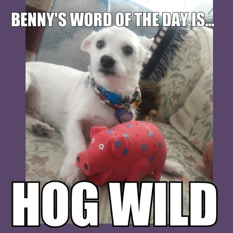 Benny's Word of the Day is hog wild