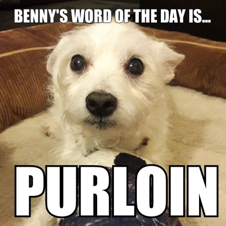 Benny's Word of the Day is... purloin
