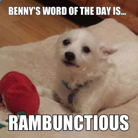Benny's Word of the Day is rambunctious