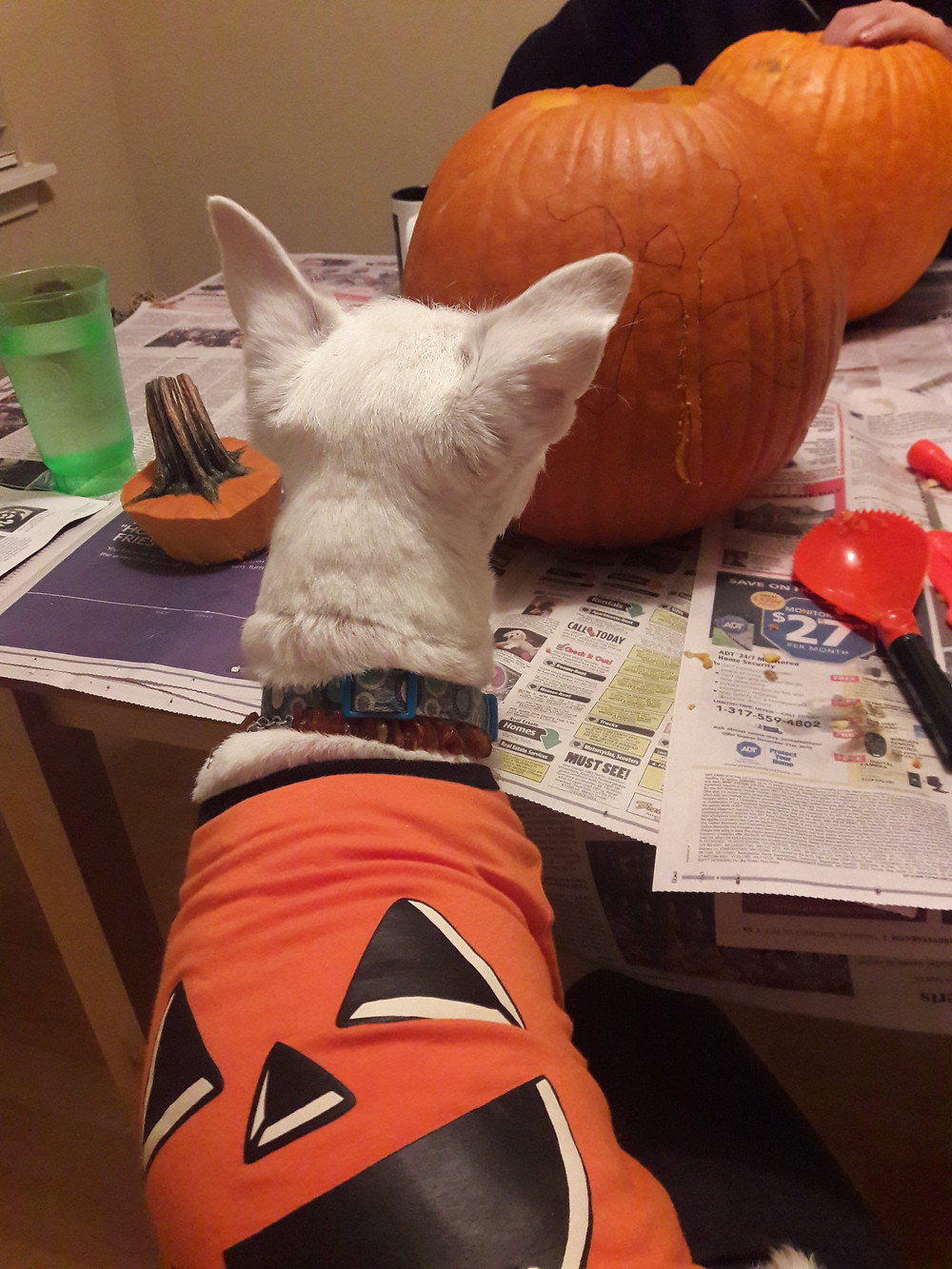 White Dog Editorial pumpkin carving