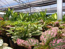 Hermosas plantas de media sombra