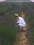 lavender_edited.jpg
