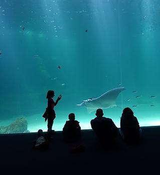 Grande baie-Nausicaa (1).JPG