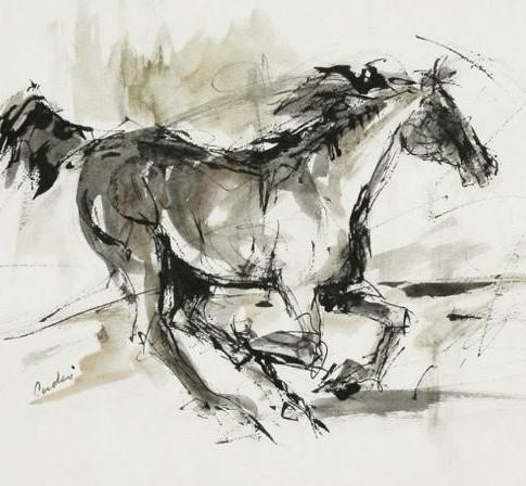 Steady Gallop