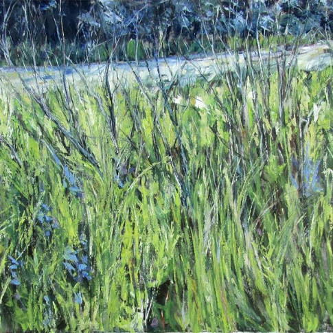 Charleswood Grasses