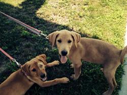 Vineyard Pups