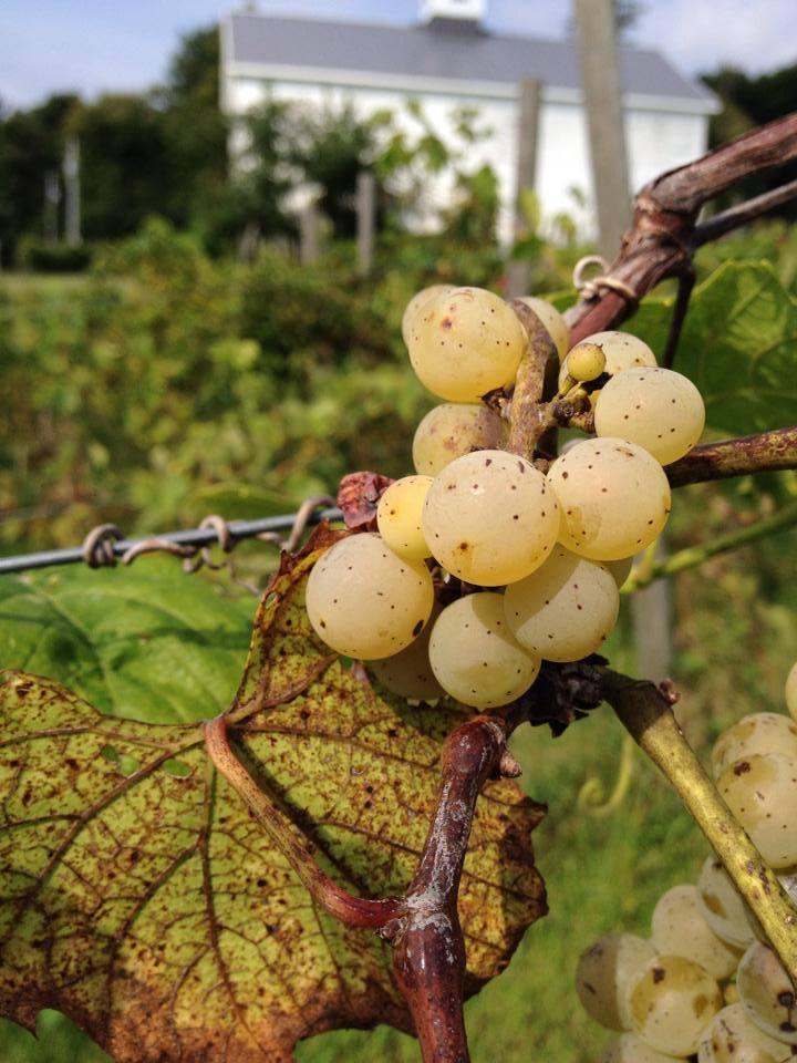 Brianna Near Harvest