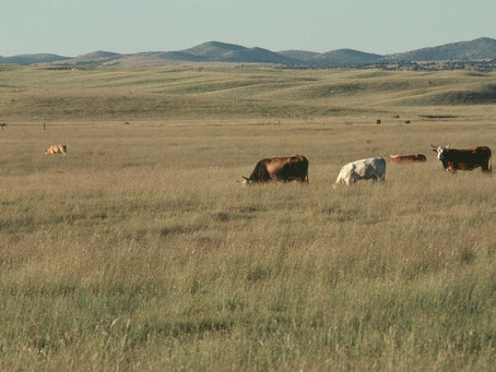 Encouraging Sustainable Beef Production