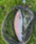 Joes 6lb 6oz Rainbow IMG_0351.jpg