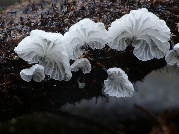 Keine Pilze