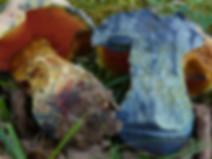 Boletus (Imperator) rhodopurpureus