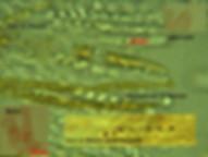 Acervus epispartius