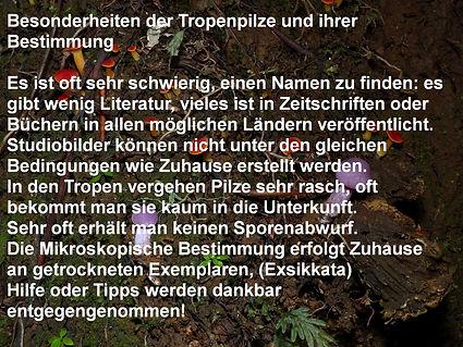 Aa: Anmerkungen zu den Tropischen Pilzen