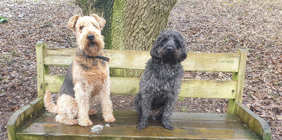 Two dogs on a park bench