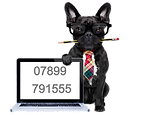 Contact Happier Hounds French Bulldog