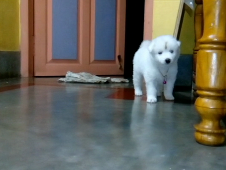 New Family-Member at Home : Our Pet