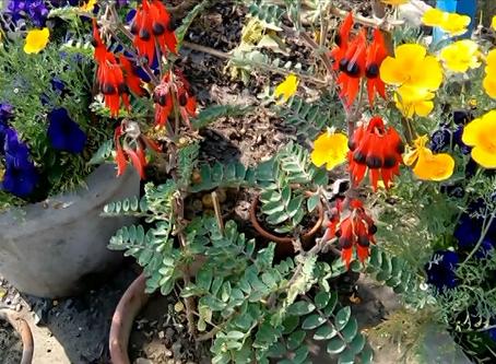 Winter-Garden' 2018