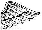 ailes 2.JPG