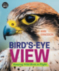 Bird's-Eye View_cover.jpeg