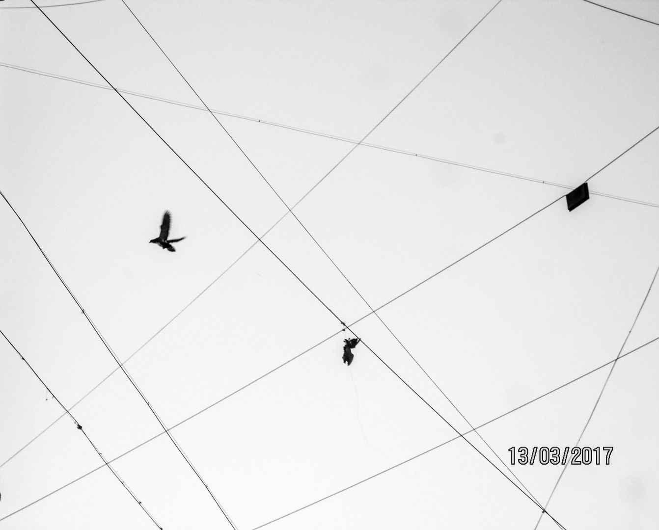 crows-wire.jpg