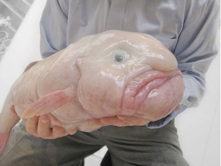Behold The Blobfish