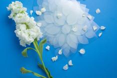 Intellinesse_petals_39.jpg