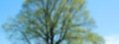 fruehling.jpg