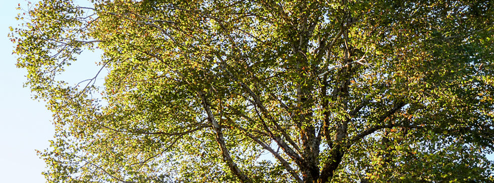 Herbst_2014.jpg
