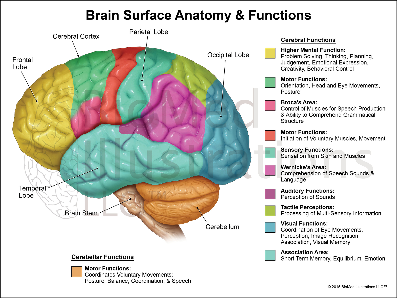 Brain - DMS Gen. Sonography