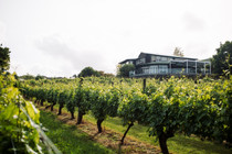 Babich Winery Tour and Tasting for 10