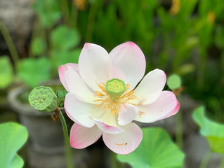 Yoga Sutra 33.1 - cultivate friendliness