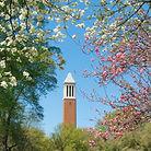 University-of-Alabama-Tuscaloosa-1.jpg