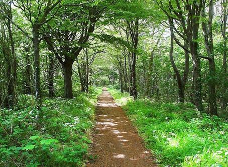 The Path To A Joyful Mind