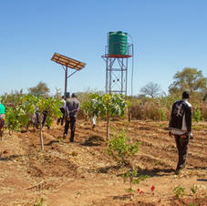 The garden solar pump and water tank