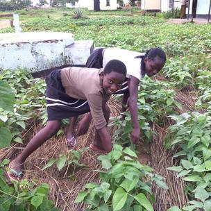 Mulching to prevent soil drying in hot sun