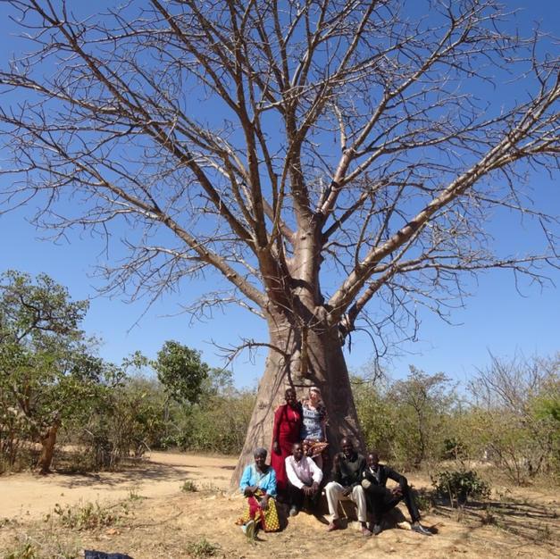 A boabab tree at kachindu school