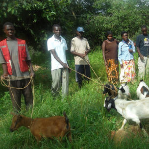 We gave goats, the kids are passed on to other farmers