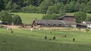 Horse ranch (2).jpg
