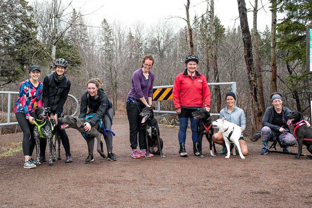 The Moncton Dog Runners