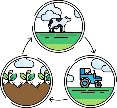 Ammonia cycle in agriculture