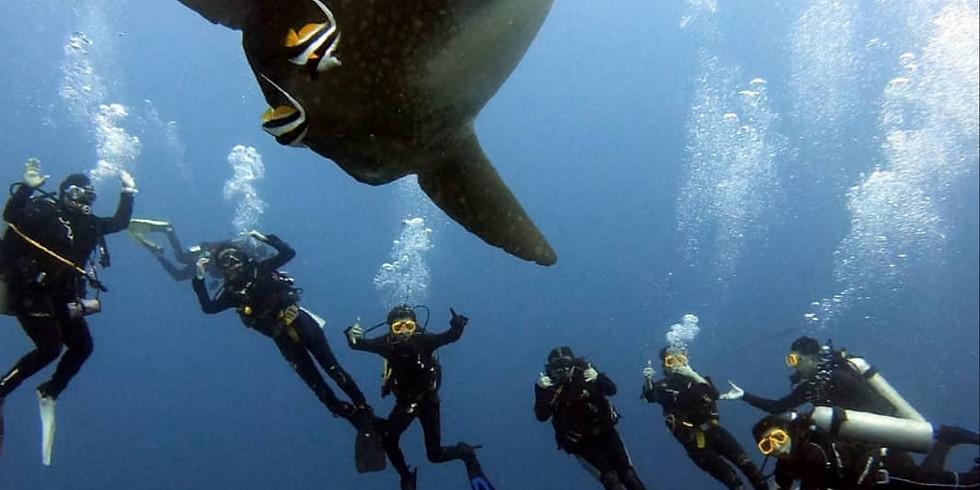 Bali Nusa Penida - Mola Mola