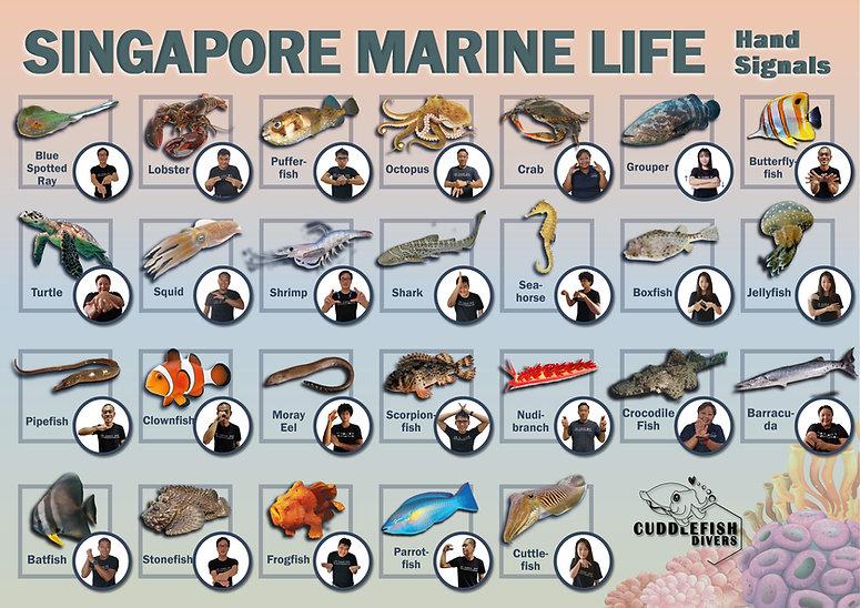 Singapore marine handsigns.jpg