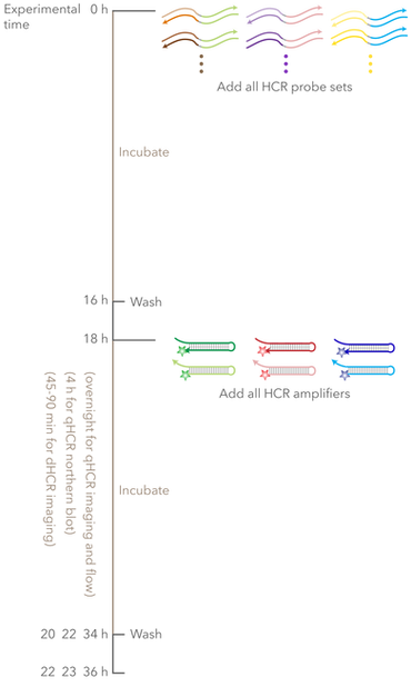 multiplexing-timeline-mobile-01.png