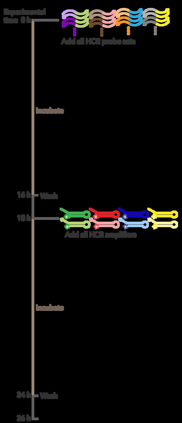 protocol-timeline-mobile_RNA-Flow.png